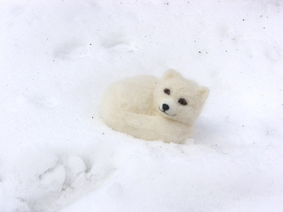 polar fox, snow fox